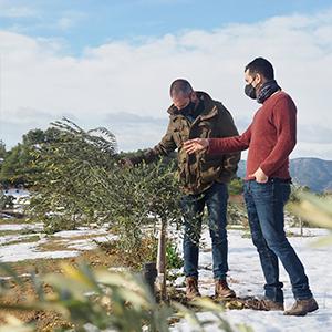 Els oleïcultors de La Torre de l'Espanyol, greument afectats pel temporal Filomena